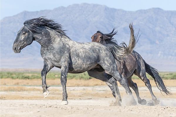 wildhorses_sm2